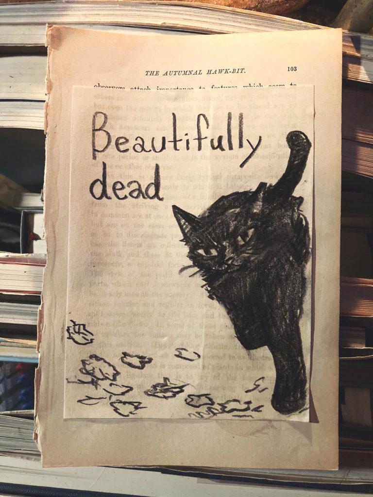 1匹の黒猫が、美しく死んだ。